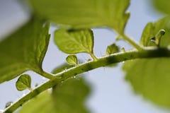 Blätter mit Hintergrund des blauen Himmels Lizenzfreie Stockfotografie