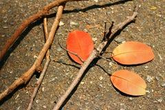 Blätter mit Niederlassungen Stockbild
