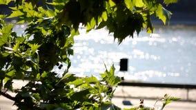 Blätter mit schimmerndem Wasser stock footage