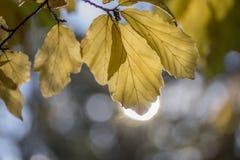Blätter mit Sonne 2 Stockbild
