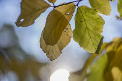 Blätter mit Sonne Lizenzfreie Stockfotografie