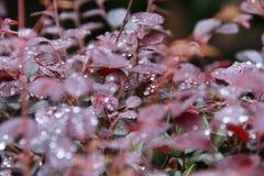Blätter mit Tautropfen Stockfotos