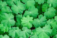 Blätter mit Tropfen Stockfoto