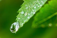 Blätter mit Tropfen des Wassers Stockfotografie