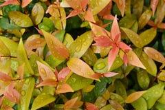 Blätter mit Tropfen des Wassers Lizenzfreies Stockfoto