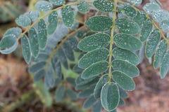 Blätter mit Wassertröpfchen Lizenzfreies Stockbild
