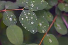 Blätter mit Wassertropfen lizenzfreies stockfoto