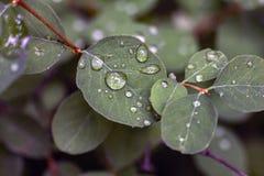 Blätter mit Wassertropfen lizenzfreies stockbild