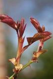 Blätter mit Web der Spinne Lizenzfreie Stockfotografie