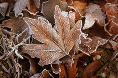 Blätter mit weißem Frost Lizenzfreie Stockfotos