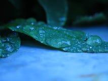 Blätter nach dem Regen irgendwo im Norden von Island lizenzfreie stockbilder