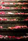 Blätter oben durchlaufen Stockfoto