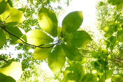 Blätter oben oben Stockfoto
