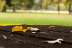 Blätter, Park, früher Fall Stockbild