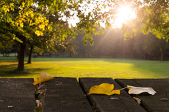 Blätter, Park, früher Fall Stockbilder