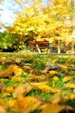 Blätter, Parks Stockbild