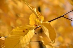 Blätter, Parks Lizenzfreie Stockbilder