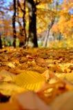 Blätter, Parks Lizenzfreies Stockbild