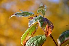 Blätter, Parks Stockfotografie