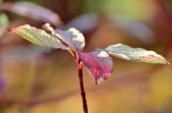 Blätter, Parks Lizenzfreie Stockfotos