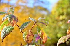 Blätter, Parks Stockfoto