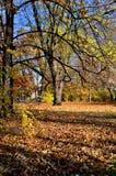 Blätter, Parks Stockfotos
