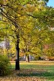 Blätter, Parks Lizenzfreies Stockfoto