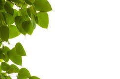 Blätter Pho. Stockfoto