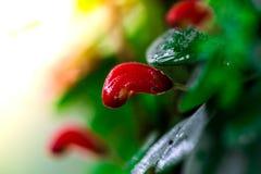 Blätter rot und grüner Mooshintergrund, Baum mit grünem Moos Eine Abbildung einer Batikauslegung in zwei Farbtönen Braun oder des Lizenzfreie Stockbilder