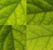 Blätter schließen oben stockfotos