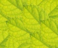 Blätter schließen oben lizenzfreie stockfotografie