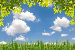 Blätter sehen mit Wolke und Wiese des blauen Himmels an stockbilder