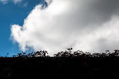 Blätter silhouettieren mit Wolken Lizenzfreies Stockbild