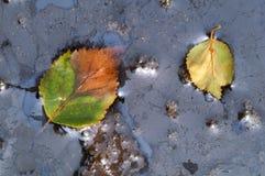 Blätter sind gefallen Stockfoto