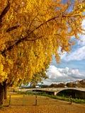 Blätter sind gelb lizenzfreies stockbild