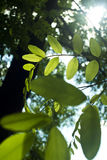 Blätter in The Sun Lizenzfreie Stockfotografie