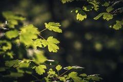 Blätter in The Sun Lizenzfreie Stockfotos