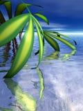 Blätter tauchen in Wasser ein Stockfotos