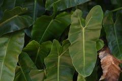 Blätter Thailand Lizenzfreies Stockbild