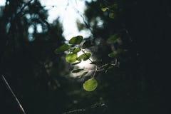 Blätter tief im Wald lizenzfreies stockfoto