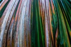 Blätter tot Stockfotografie