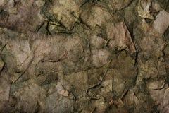 Blätter trocknen Stockbilder