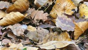 Blätter trocknen aus den Grund stock footage