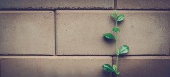 Blätter und alte Ziegelsteine Stockbild