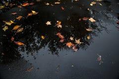 Blätter und Baumreflexion in einer Pfütze Stockfotos