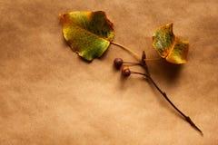 Blätter und Beeren. stockbilder