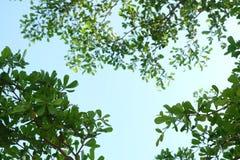 Blätter und blauer Himmel Stockfoto