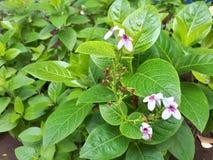Blätter und Blumen stockfotos