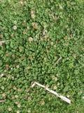 Blätter und Blumen lizenzfreies stockbild