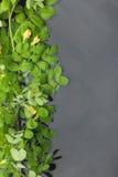 Blätter und Blumen mit Tautropfen reflektierten sich im Wasser Stockfotos
